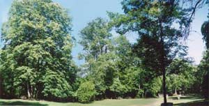 Trees provide shade for the group area.